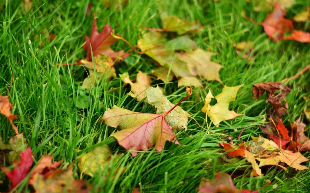 fall lawn care includes raking leaves