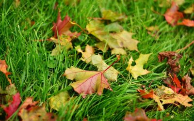 The Basics of Fall Lawn Care