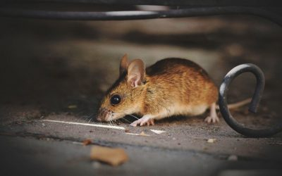 5 Ways to Make Your Home Unappealing to Pests